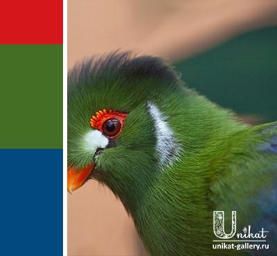 синий и зеленый с ярко-красным акцентом